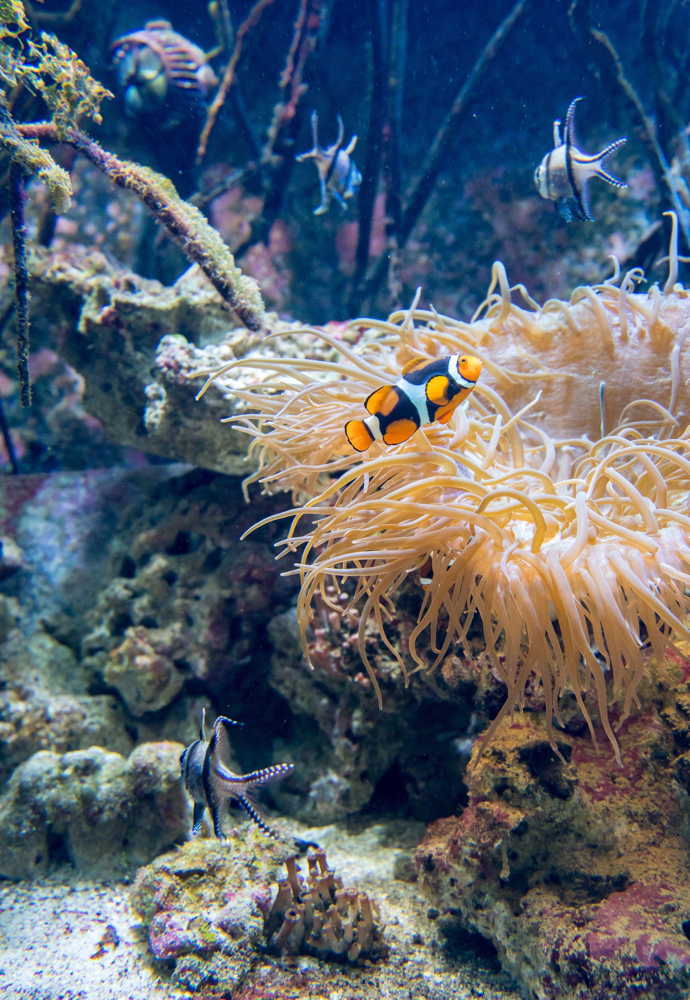 Guide To Birch Aquarium San Diego San Diego California Travel