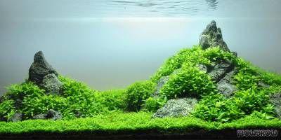 Tales Creek - Flowgrow Aquascape/Aquarien-Datenbank