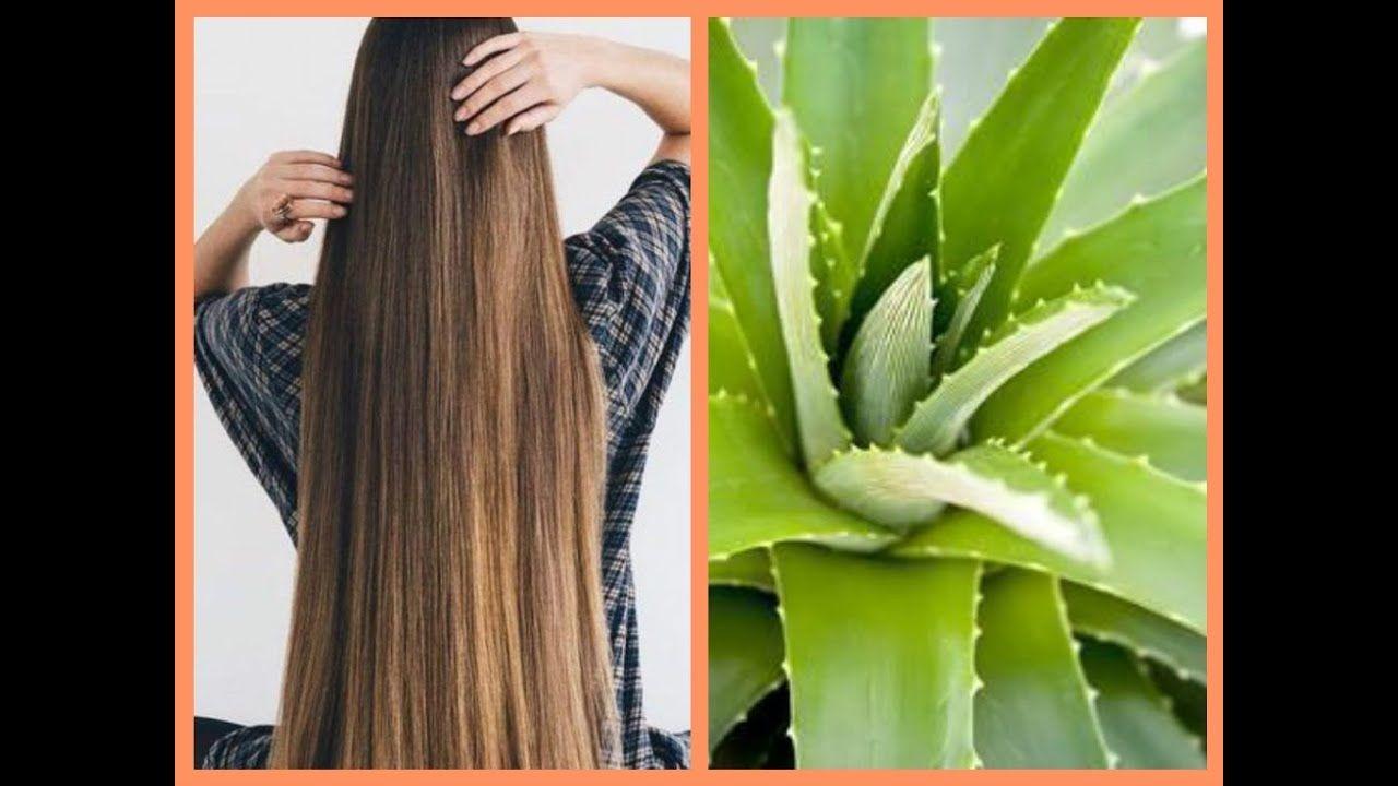 فوائد جل الصبار للشعر Hair Hair Styles Dreadlocks