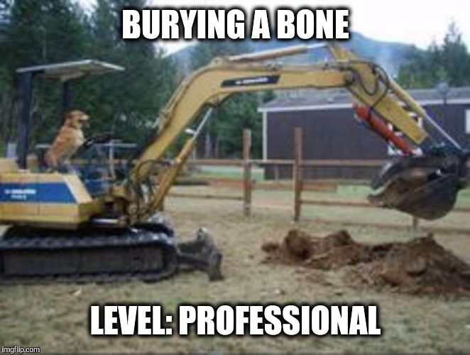 Anyone else have trouble with their dog digging up the ...