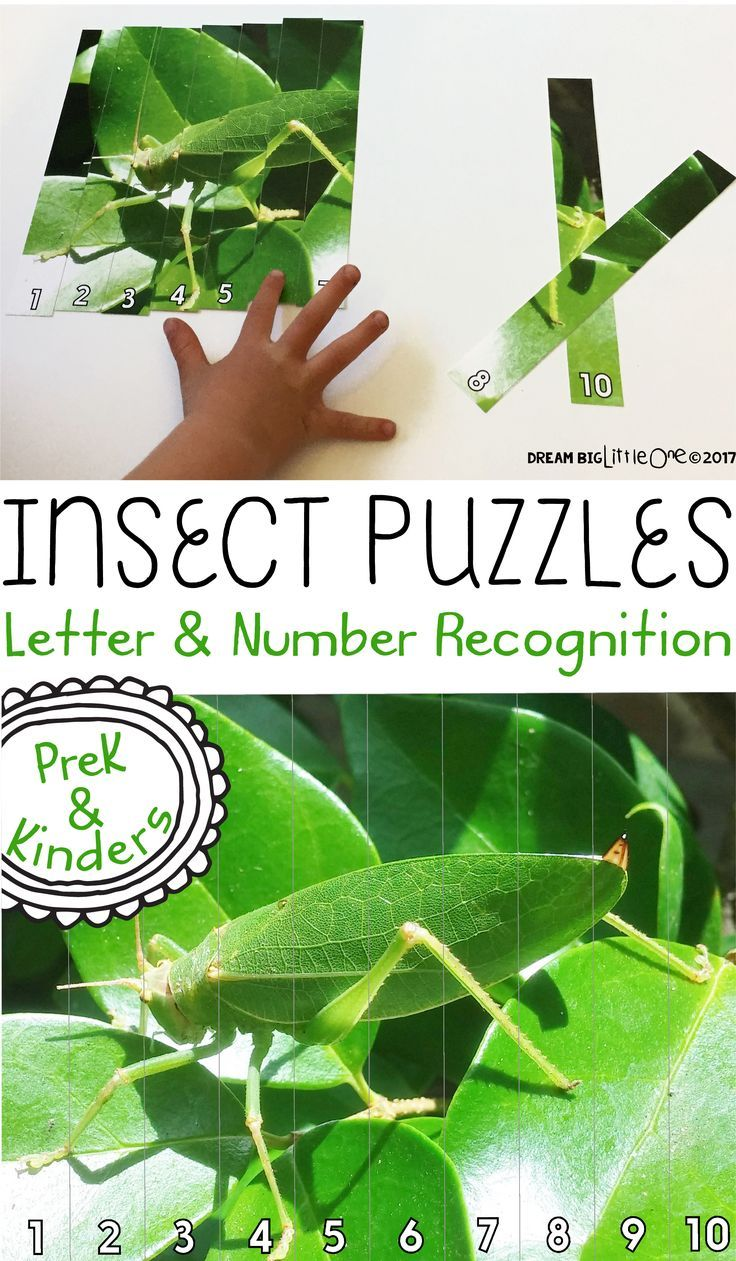 Insects Puzzle Number And Letter Recognition With Real Photos Insects Theme Preschool Insects Theme Bugs Preschool