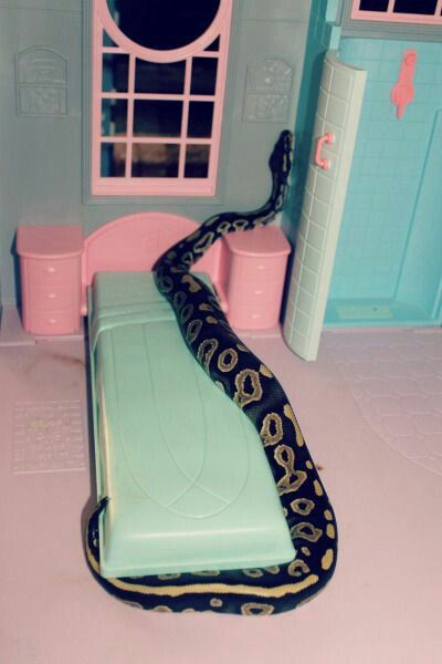 Pin by Tanya Arkhe on LUX | Snake, Ball python, Grunge ...