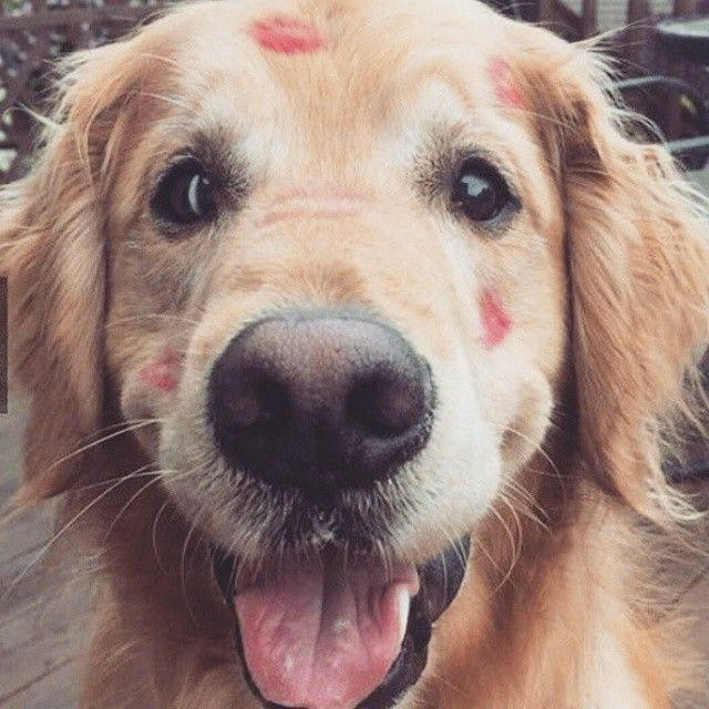 Have you kissed your dog today?