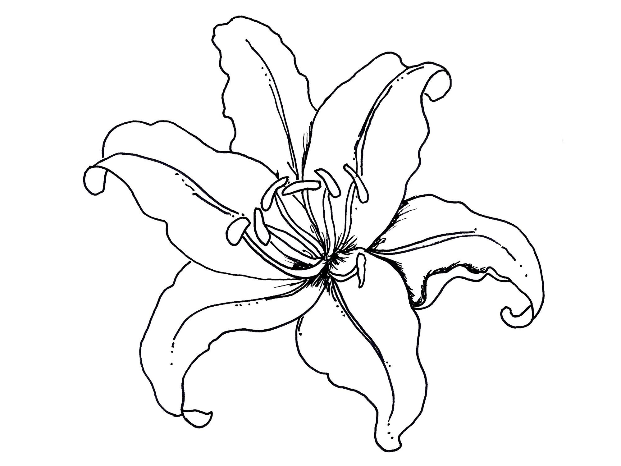 Clipart Lily Pad Flower Coloring Cartoon