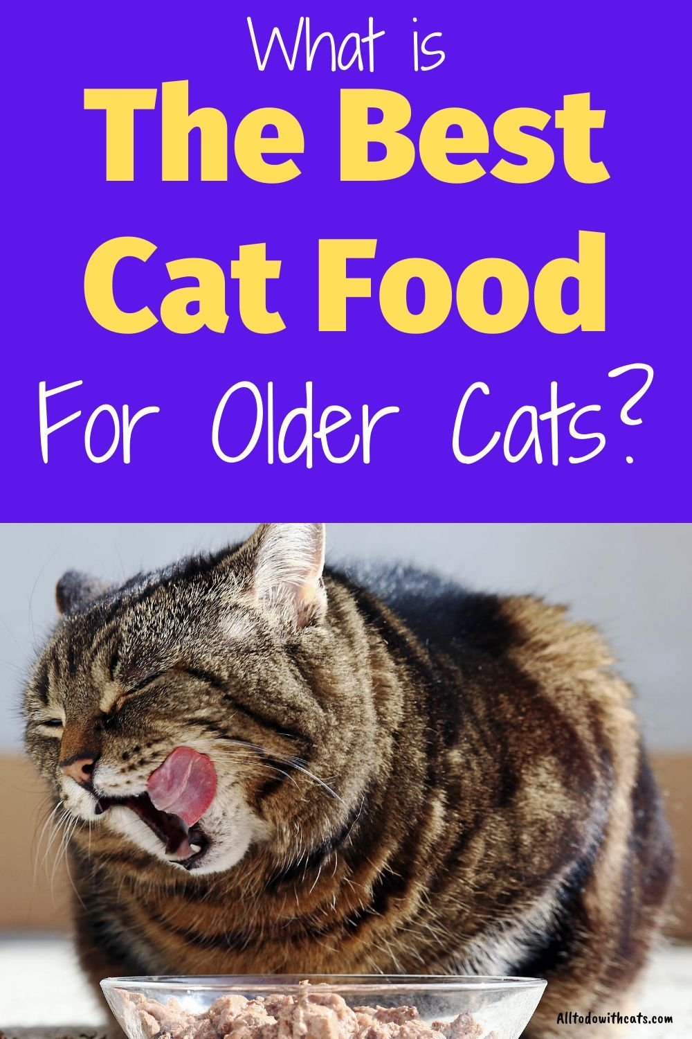 What Is The Best Cat Food For Older Cats Feeding Your Senior Kitty In 2020 Best Cat Food Older Cats Cat Food