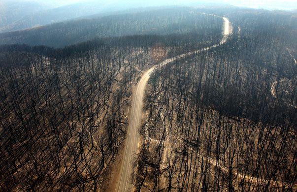 charred forest - Recherche Google