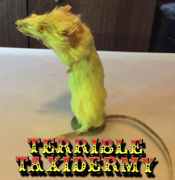 Flourescent! Terrible Taxidermy