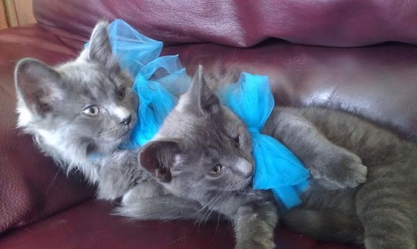 FREE on craigslist! Most beautiful kittens ever! Animal