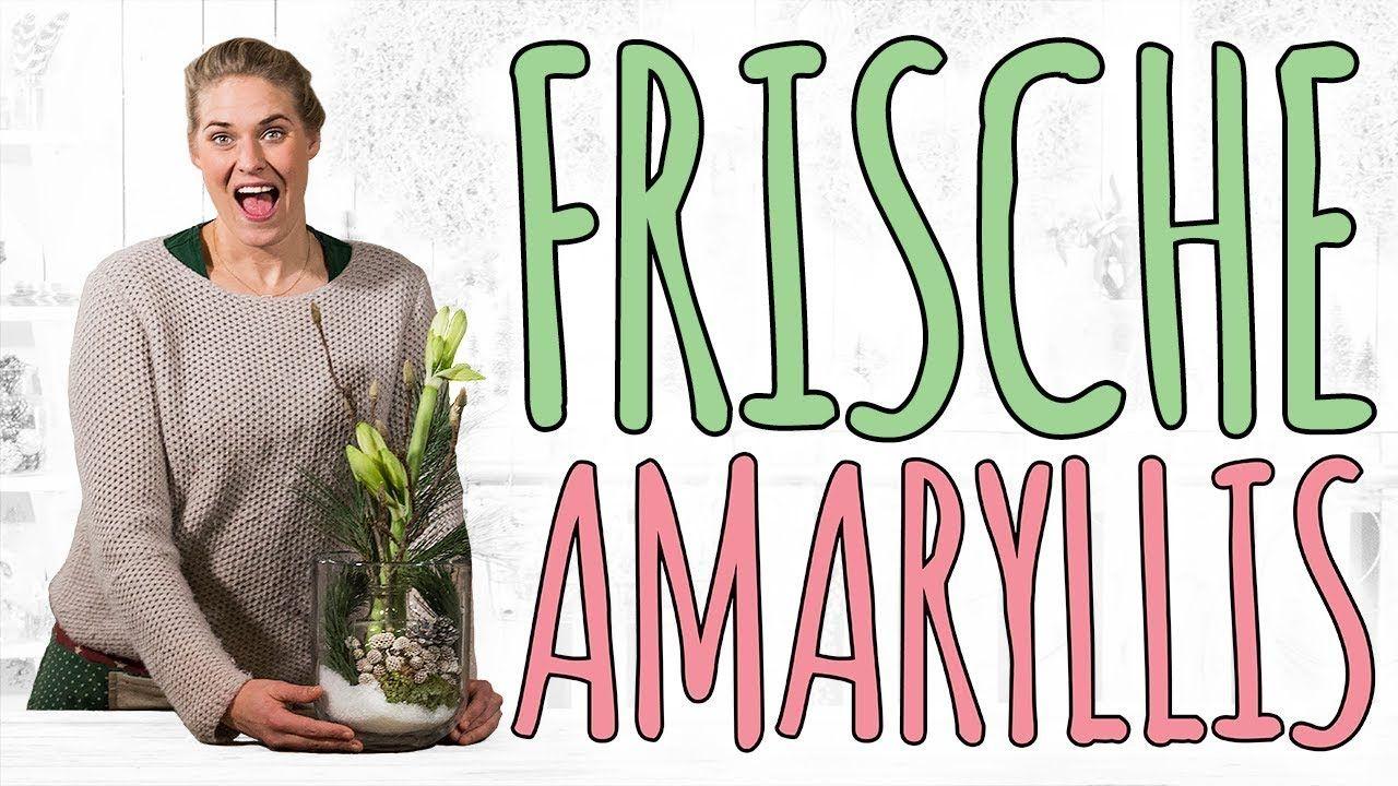 FRISCHE AMARYLLIS - EINFACH SCHÖN IN SZENE SETZEN - DIY #amaryllisdeko