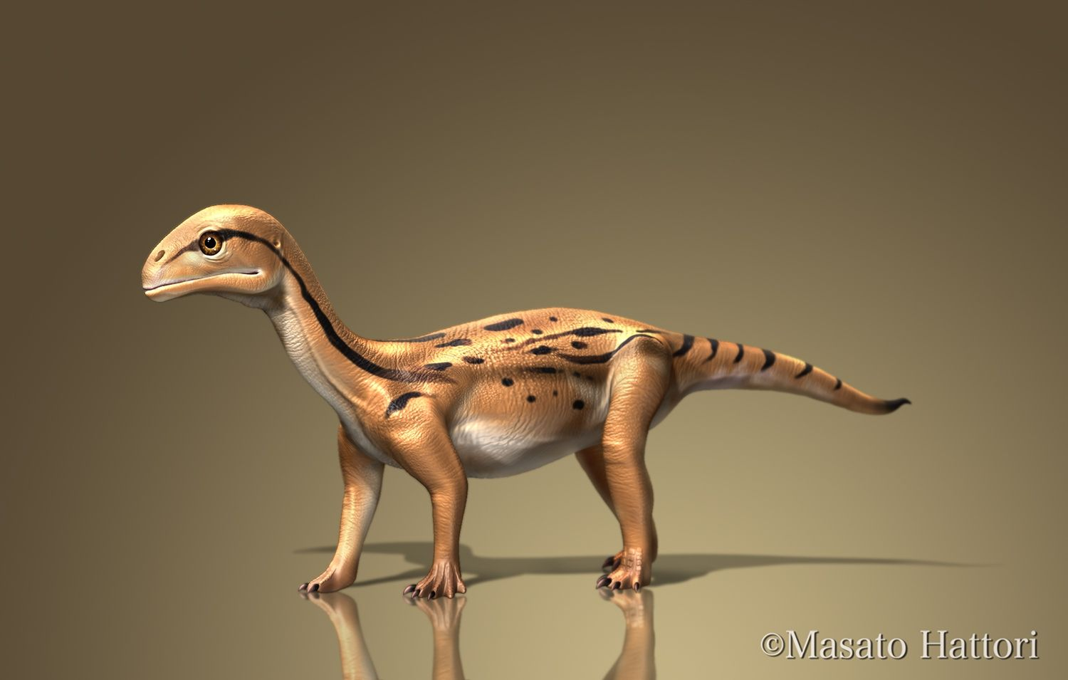 herbivorous dinosaur juvenile mususaurusu mussaurus late triassic argentina about 20cm it was discovered