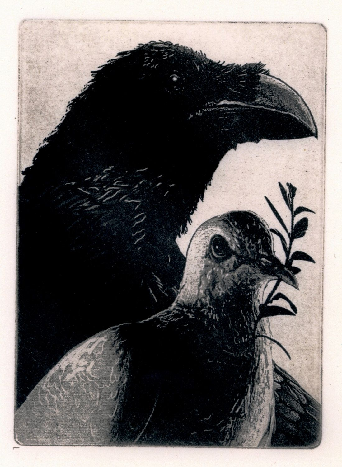 Sale-Noahs birds - GENESIS AND GILGAMESH and The Great Flood. Raven (birds, dove, Bible, crow) Series-  -  Intaglio Etching. 5 x 7 inch 2010. $25.00, via Etsy.