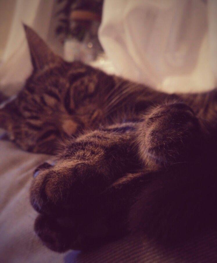 Mycat ❤