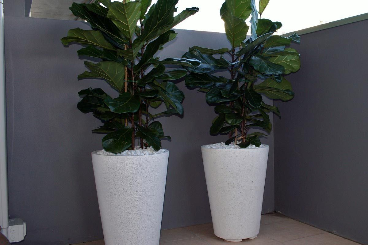 Terrazzo benchtops sydney : The chunky terrazzo crucible balances the big leaves of this plant