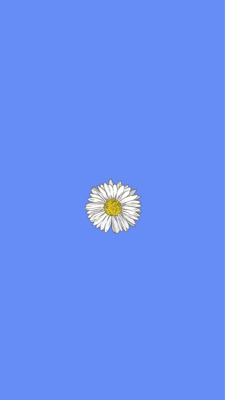 Camomile gif flower