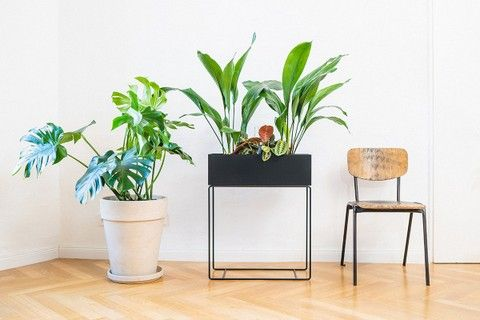 5 Easy House Plants to Get Your Home Jungle Started