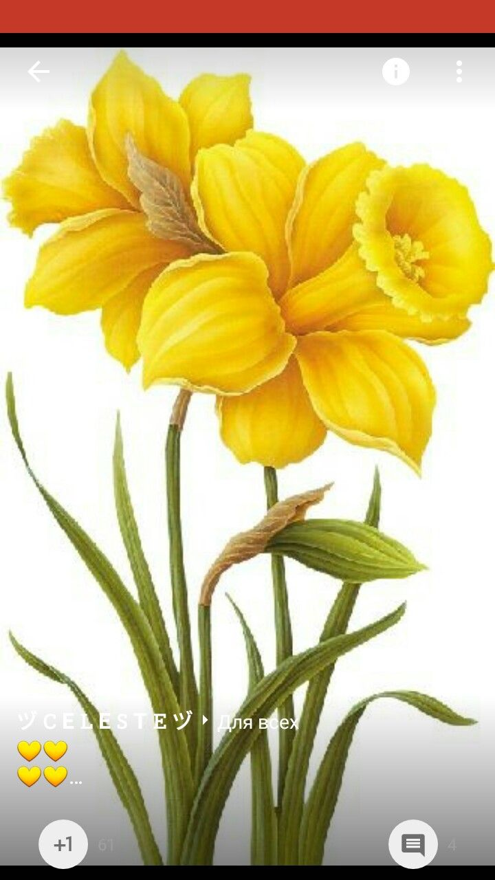 Narcisos paintings pinterest flowers daffodils and flower