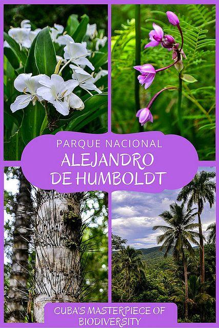 Alejandro de Humboldt National Park: Cuba's Masterpiece of Biodiversity