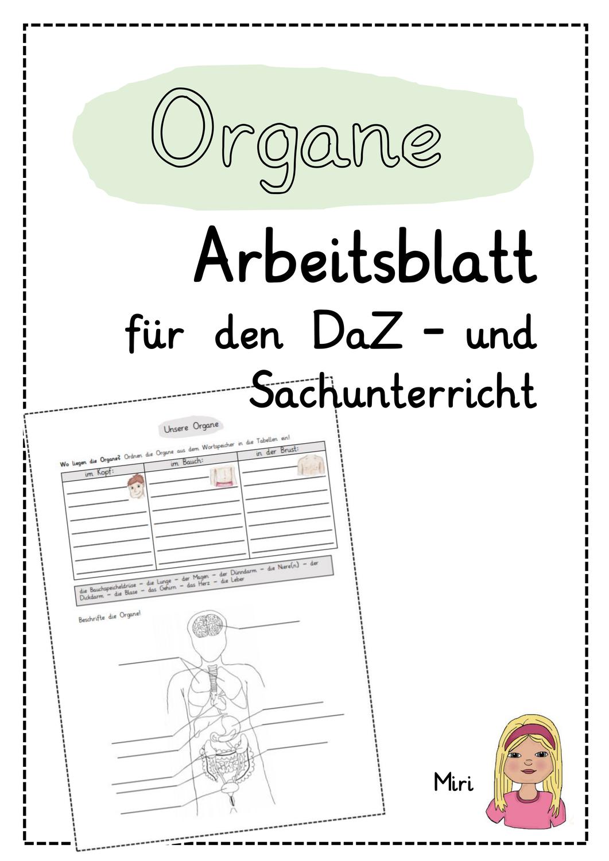 Die Organe Arbeitsblatt Fur Den Daz Und Sachunterricht Unterrichtsmaterial In Den Fachern Daz Daf Sachunterricht Arbeitsblatter Sachen Daf