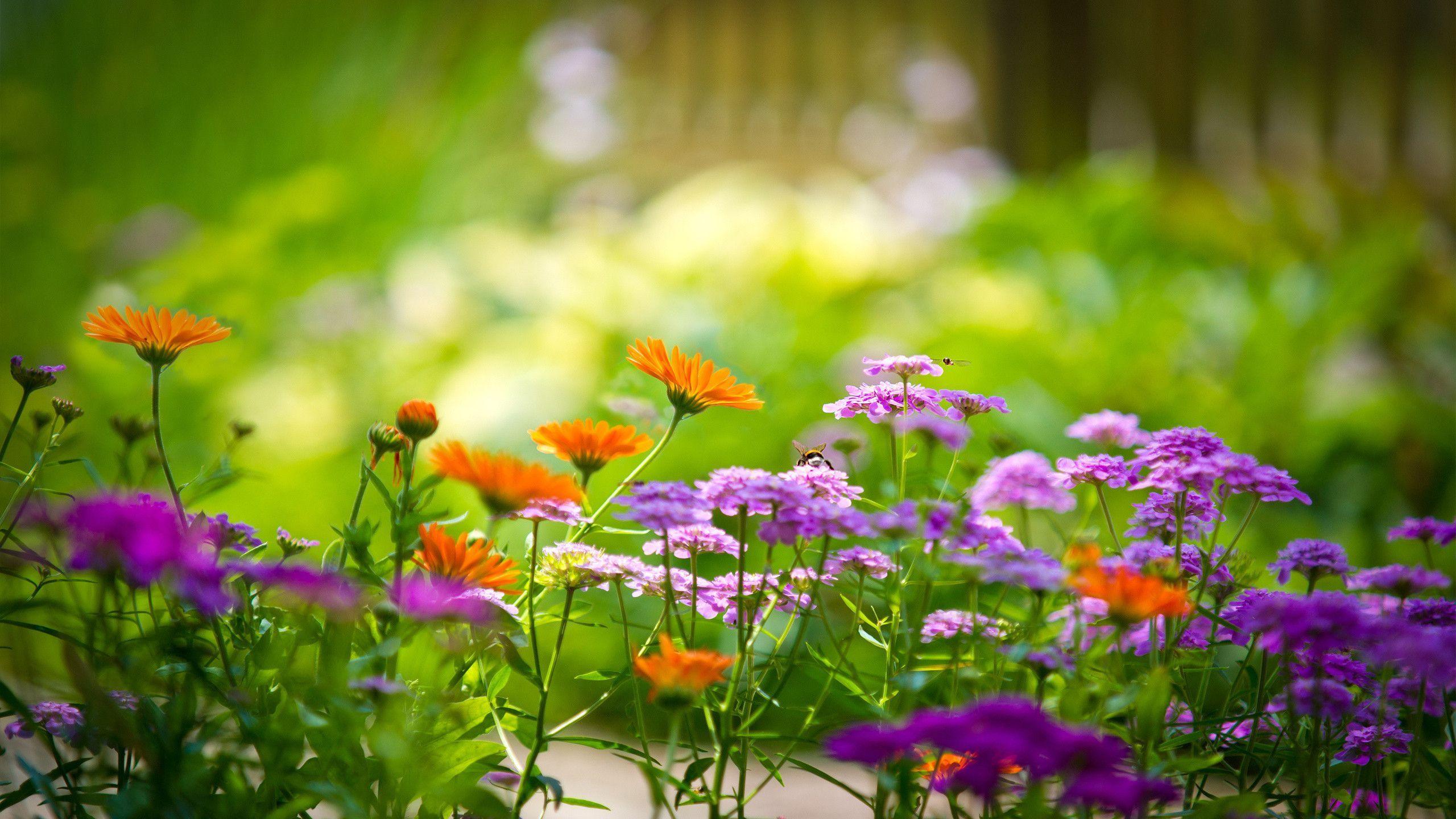 HD Flower Garden Wallpaper 1920×1080 Flower Garden
