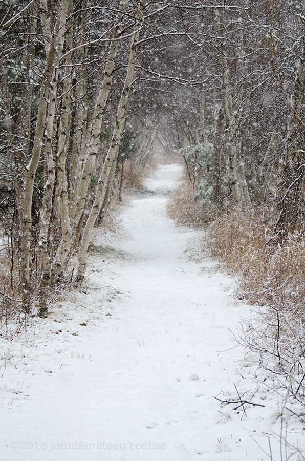 snow on the Jesup Path, Acadia National Park, Bar Harbor, Maine