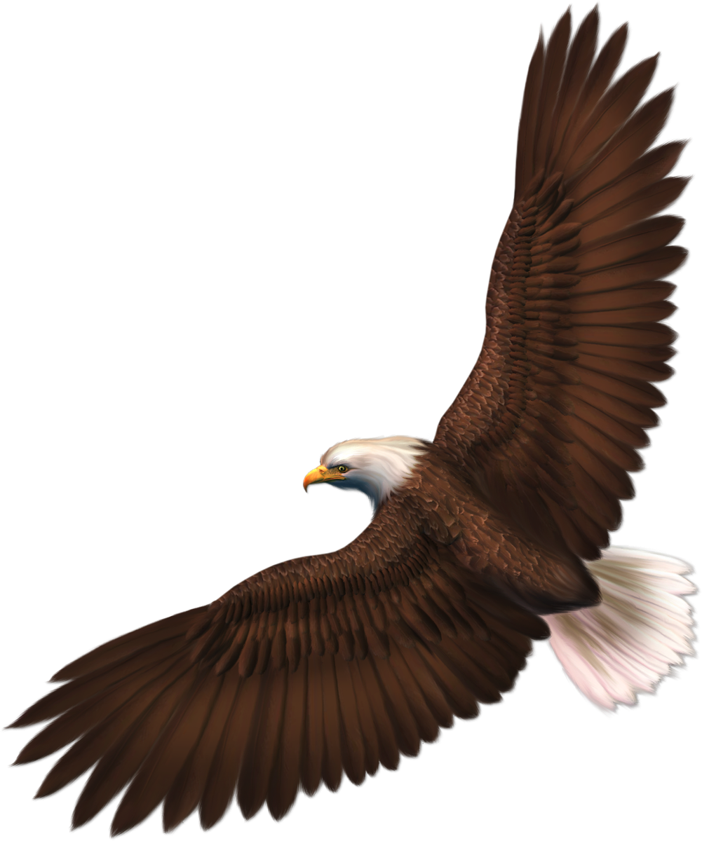 Eagle PNG image with transparency, free download image