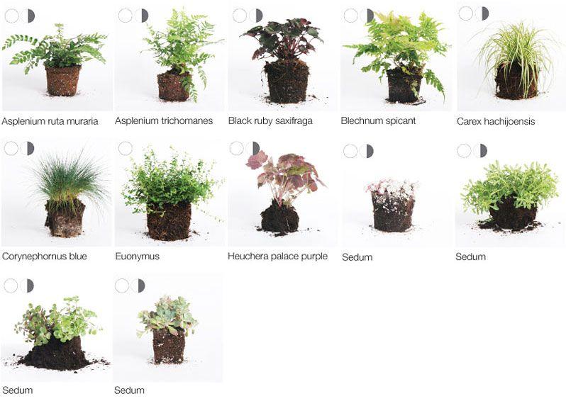 Pflanzen geeignet zur Wandbegrünung