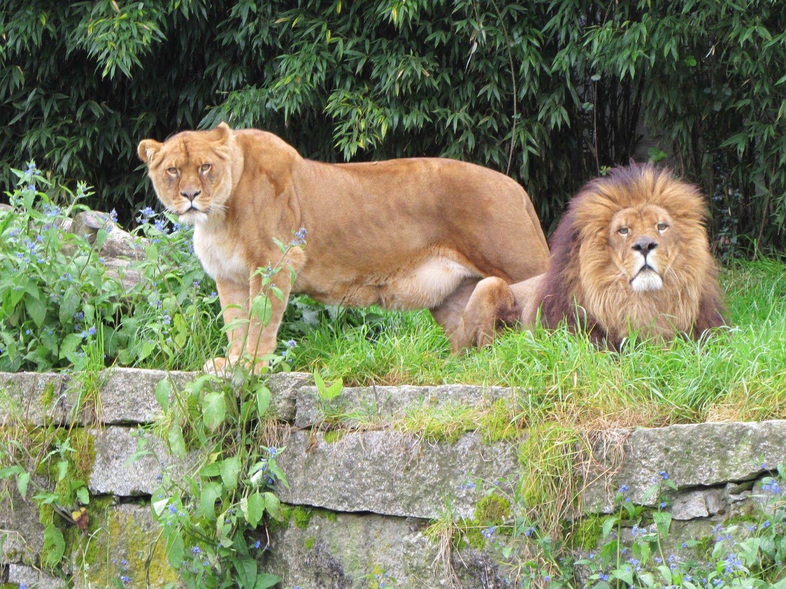 5. Conocer el Único Zoo de Galicia.