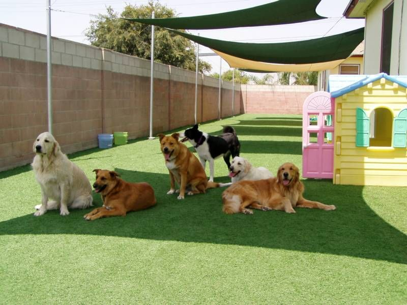 BOARDING KENNELS - Petopia Pet Resort - (714) 637-1986