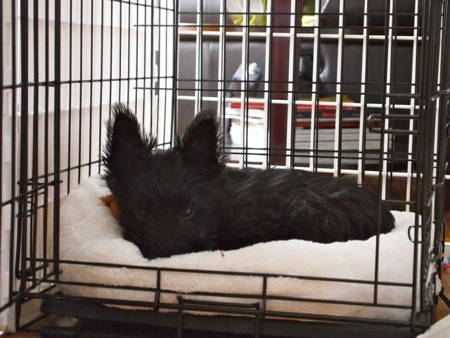 Crate training is one of the best things you can do for your dog.