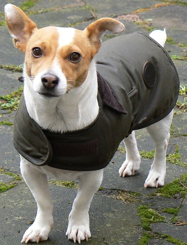 Barbour Wax Dog Coat Olive Dog Coats Daisy Dog Dogs
