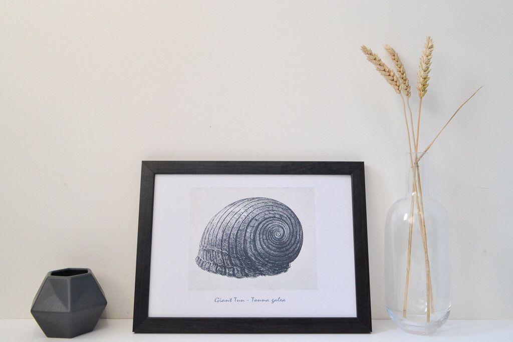 Framed nautical print vintage seashell poster minimalist