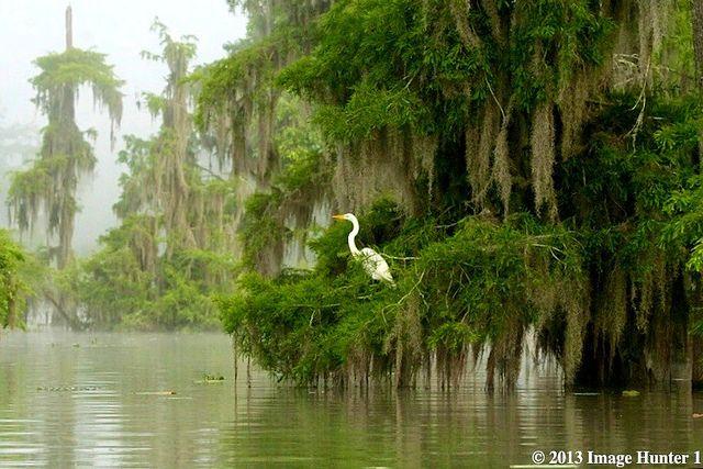 Waking Up  Lake Martin Louisiana | Endless Wildlife