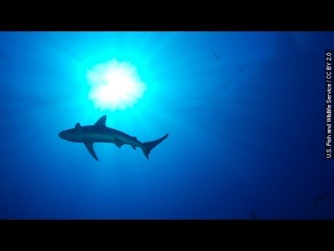 Man's life is saved because of a shark attack