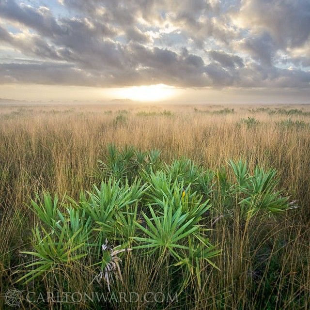 Happy Labor Day everyone. This picture is sunrise over the Kissimmee Prairie captured in 2012 during the Florida Wildlife Corridor Expedition (@fl_wildcorridor). The Kissimmee Prairie's preserves and working ranches together form the heart of the Everglades Headwaters National Conservation Area, prioritizing both habitat protect for endangered species and watershed restoration.