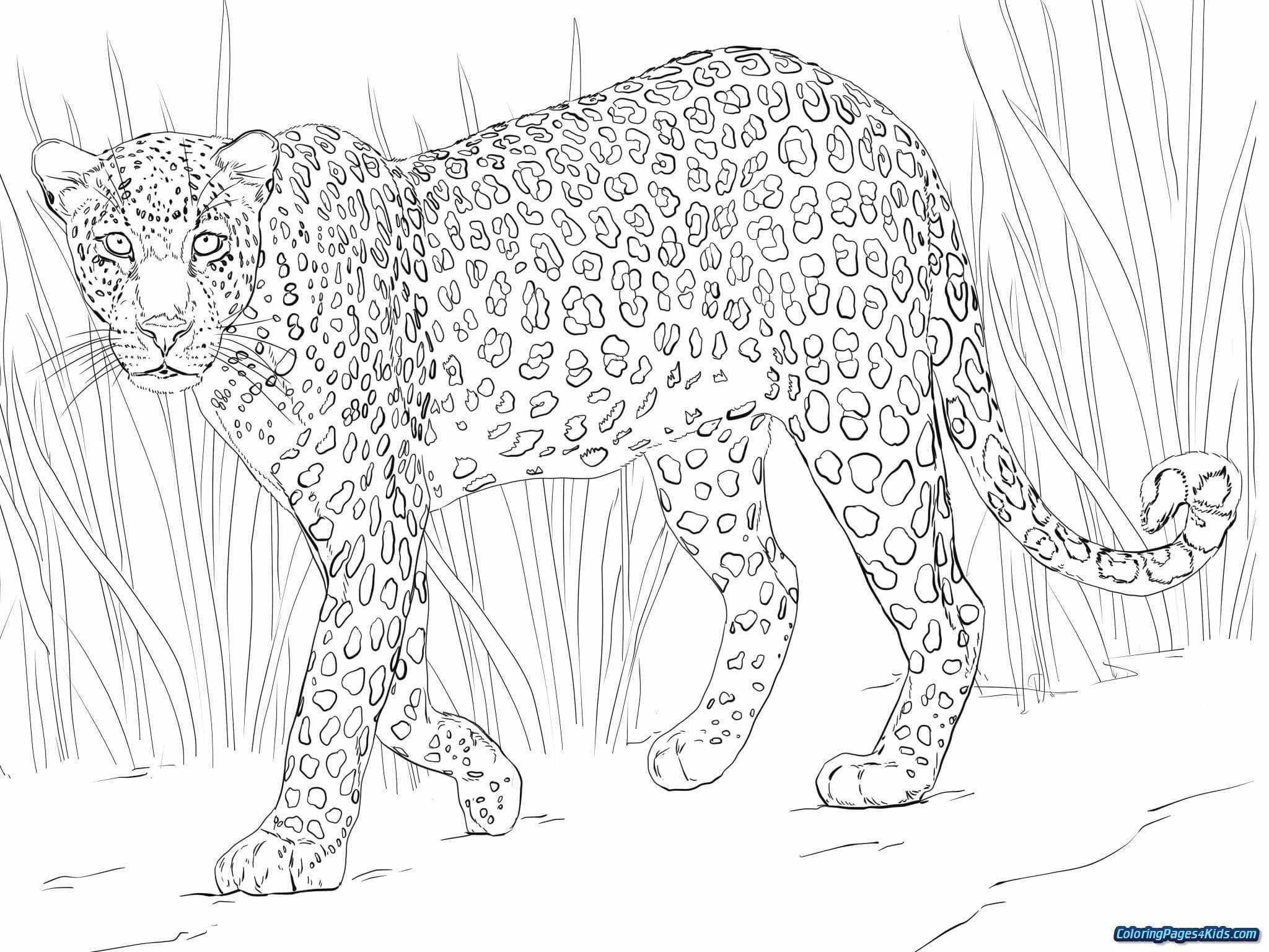 Animal Jam Coloring Pages Inspirational Inspirational Snow Leopard Coloring Page Nocn African Leopard Coloring Pages Animal Coloring Pages