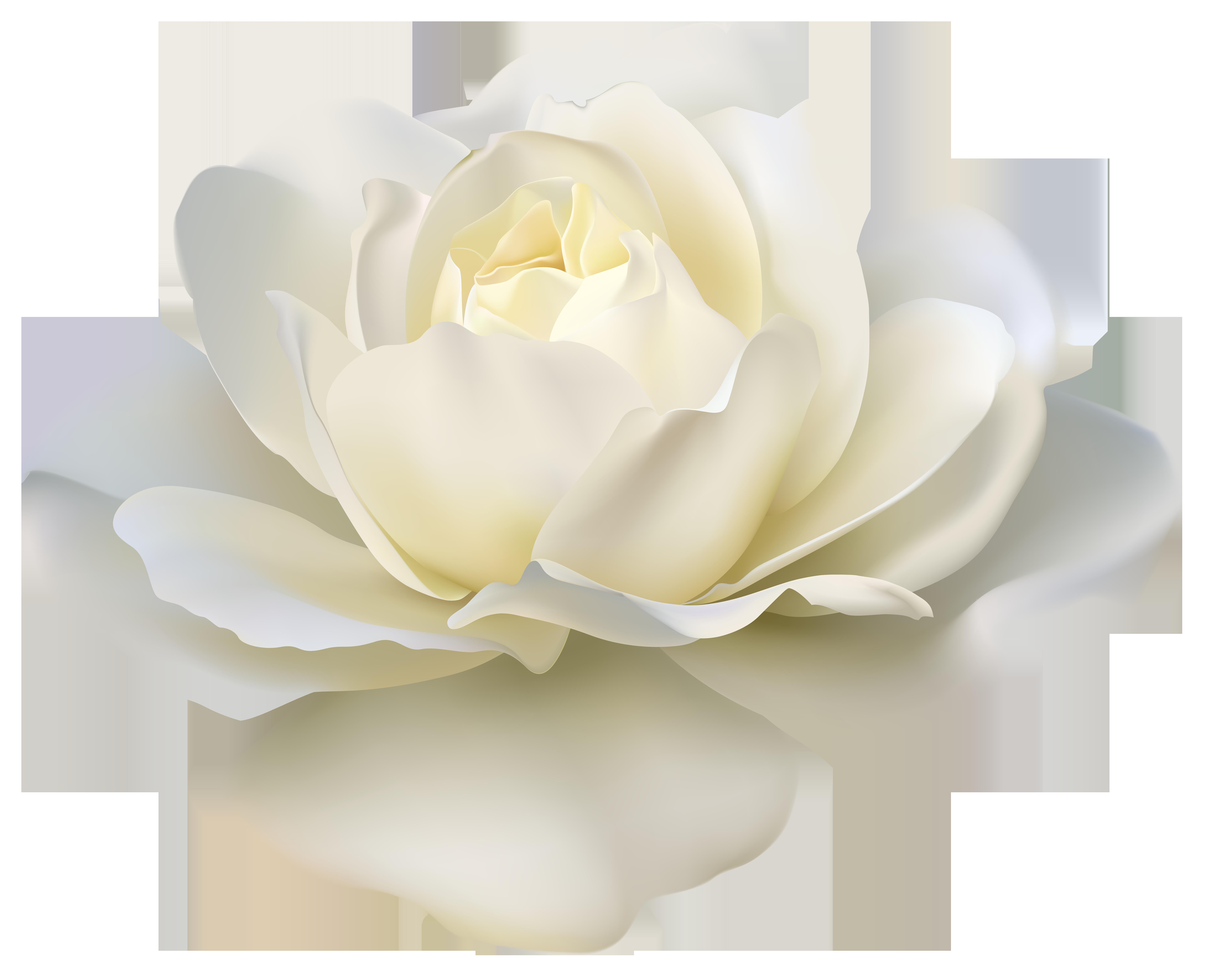 710863.png (7798×6333) White rose png, Rose doodle