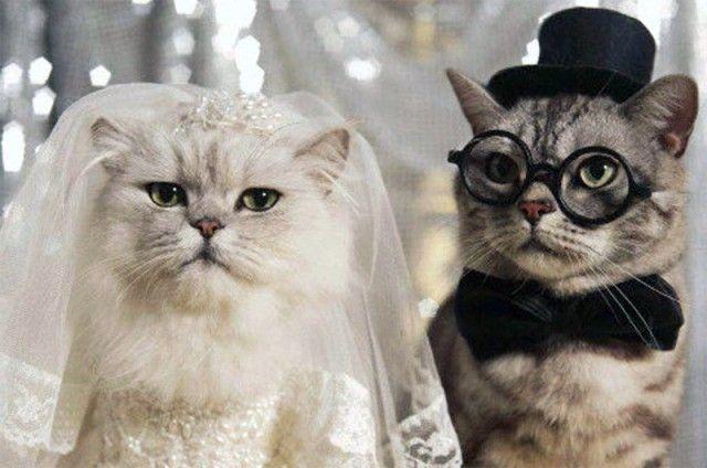 Cat wedding cute kitties need a laugh pinterest cat cat wedding cute kitties junglespirit Images