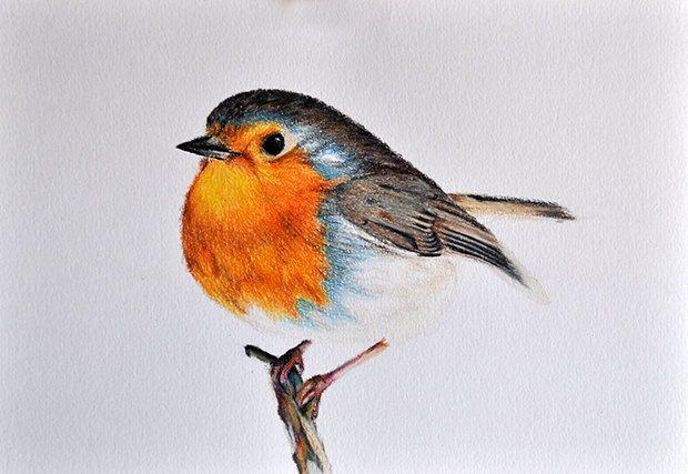 Original Drawing Colored Pencil Bird Illustration Cute Robin 5 5