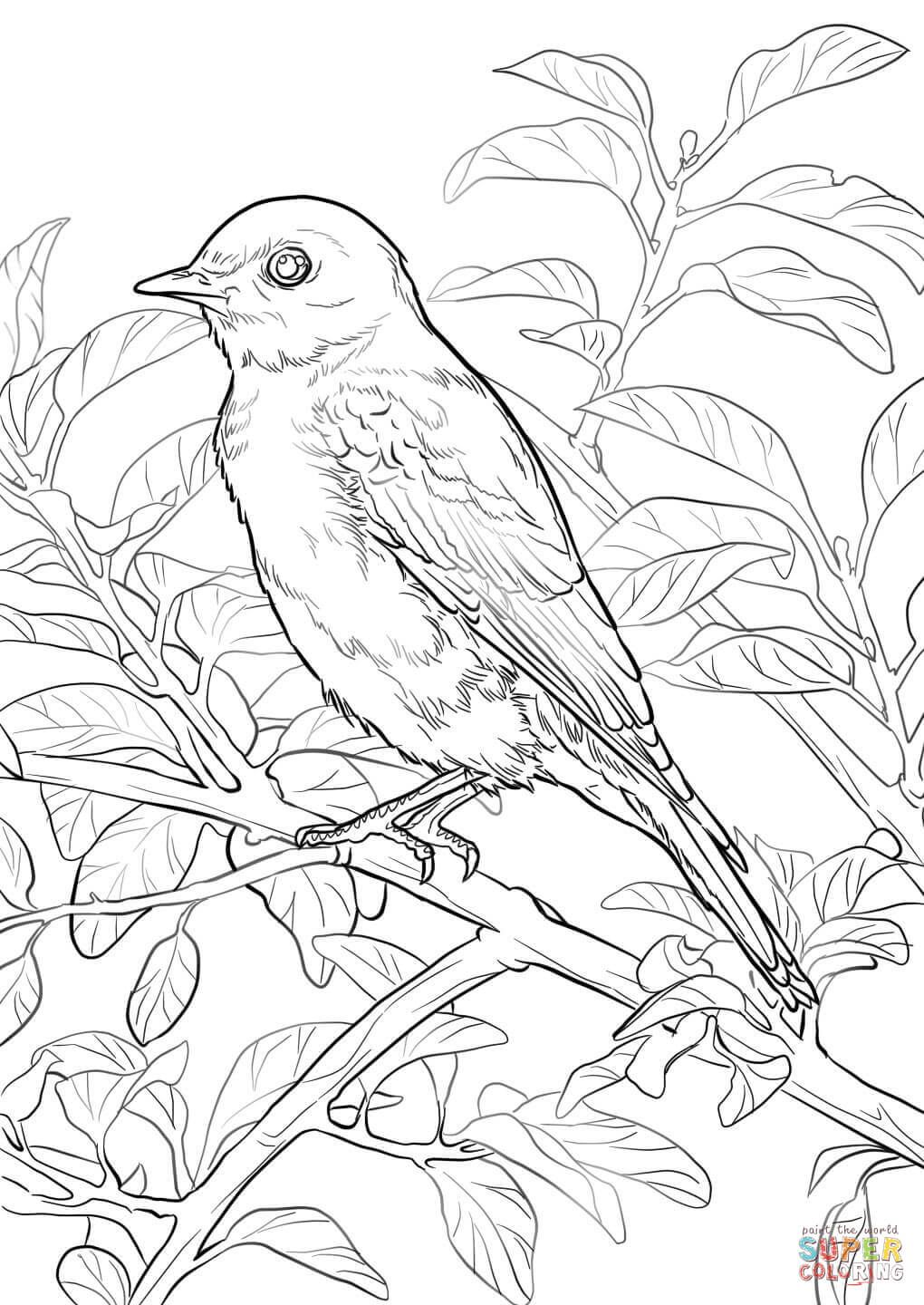 Eastern Bluebird Coloring Page Free Printable Coloring Pages In 2021 Bird Coloring Pages Coloring Pages Flag Coloring Pages