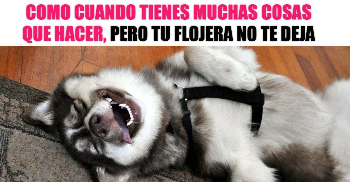 15 Divertidos Memes De Perros Que Solo Lograran Contagiarte Su Buen Humor Memes Perros Perros Graciosos Perros