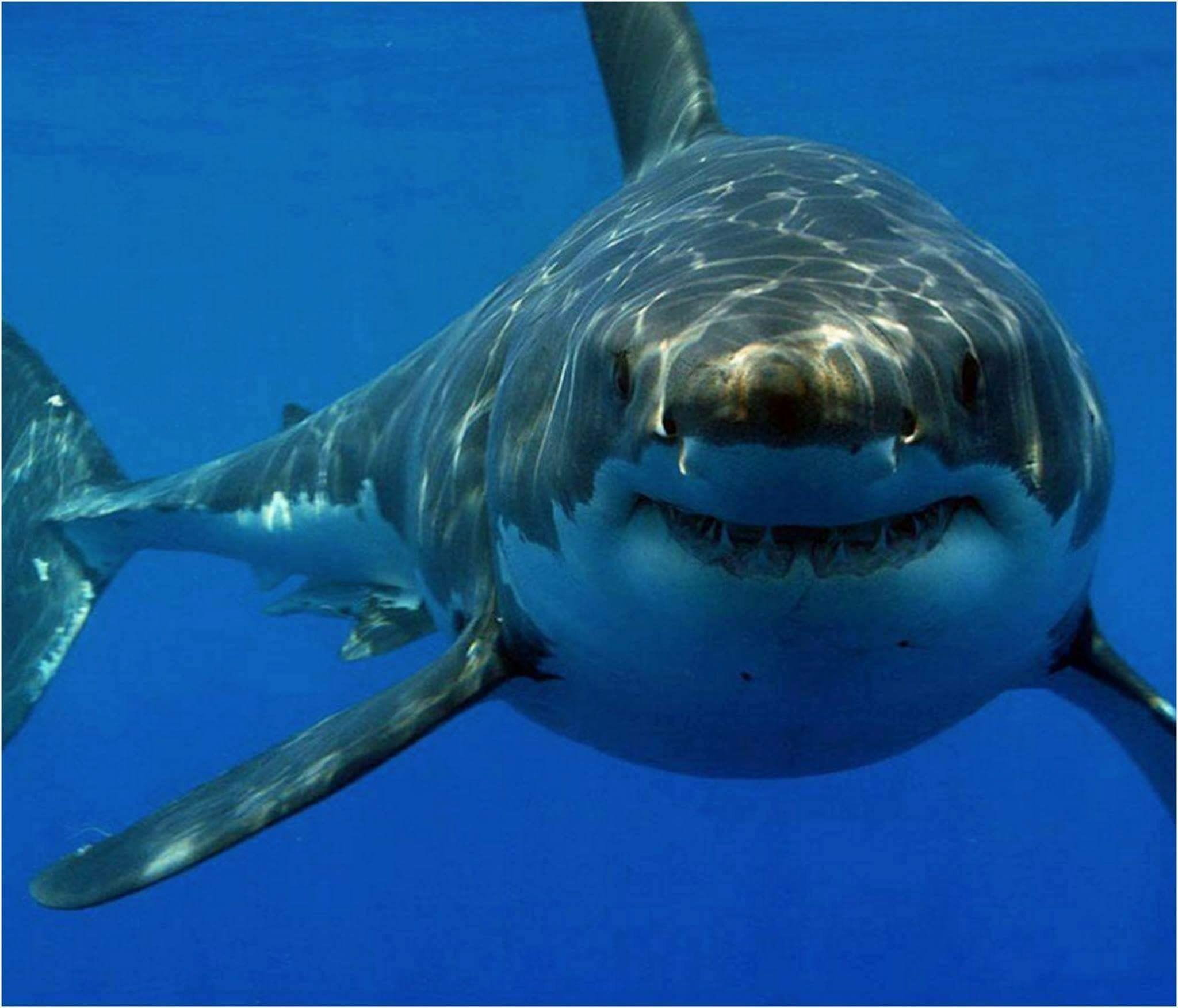 17+ Animals with human teeth ideas