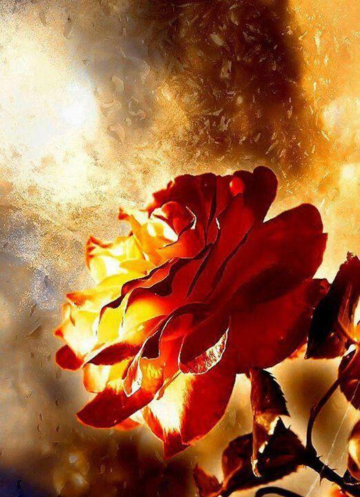 гиф огненные цветы