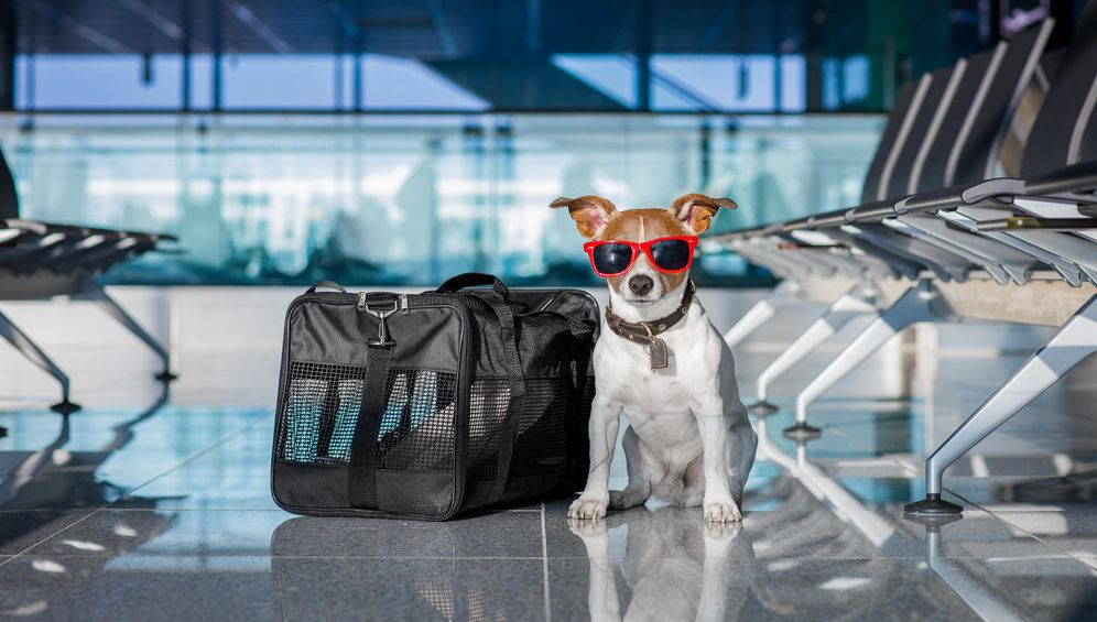 Smart Tips On How Travel With Your Pets In Airplane Pet Carriers Pet Travel Pet Travel Carrier