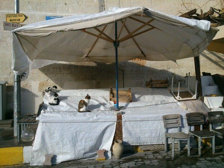 Gatos silla y jarrón