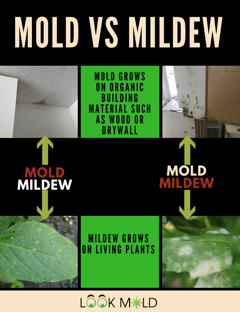 Mold Inspection Expert Reveals All You Need To Know Prior