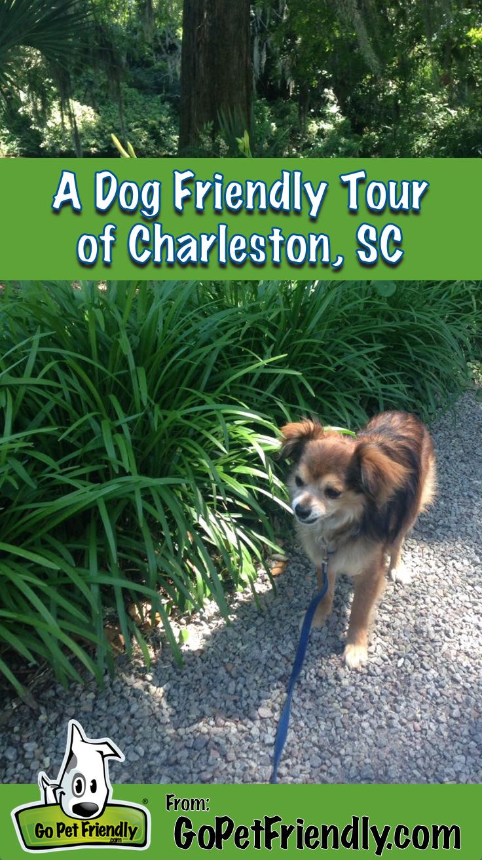 A Dog Friendly Tour Of Charleston Sc