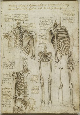 Recto:+The+skeleton.+Verso:+The+muscles+of+the+face+and+arm,+and ...
