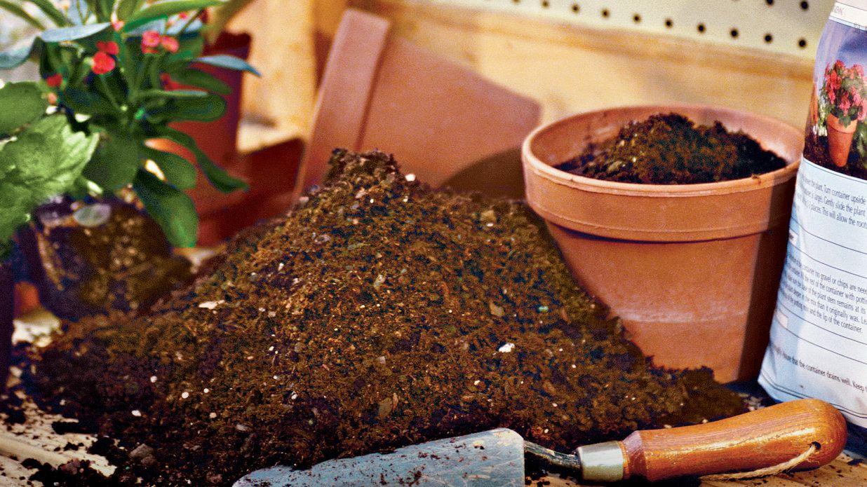 The Scoop on Potting Soil | Potting soil and Gardens