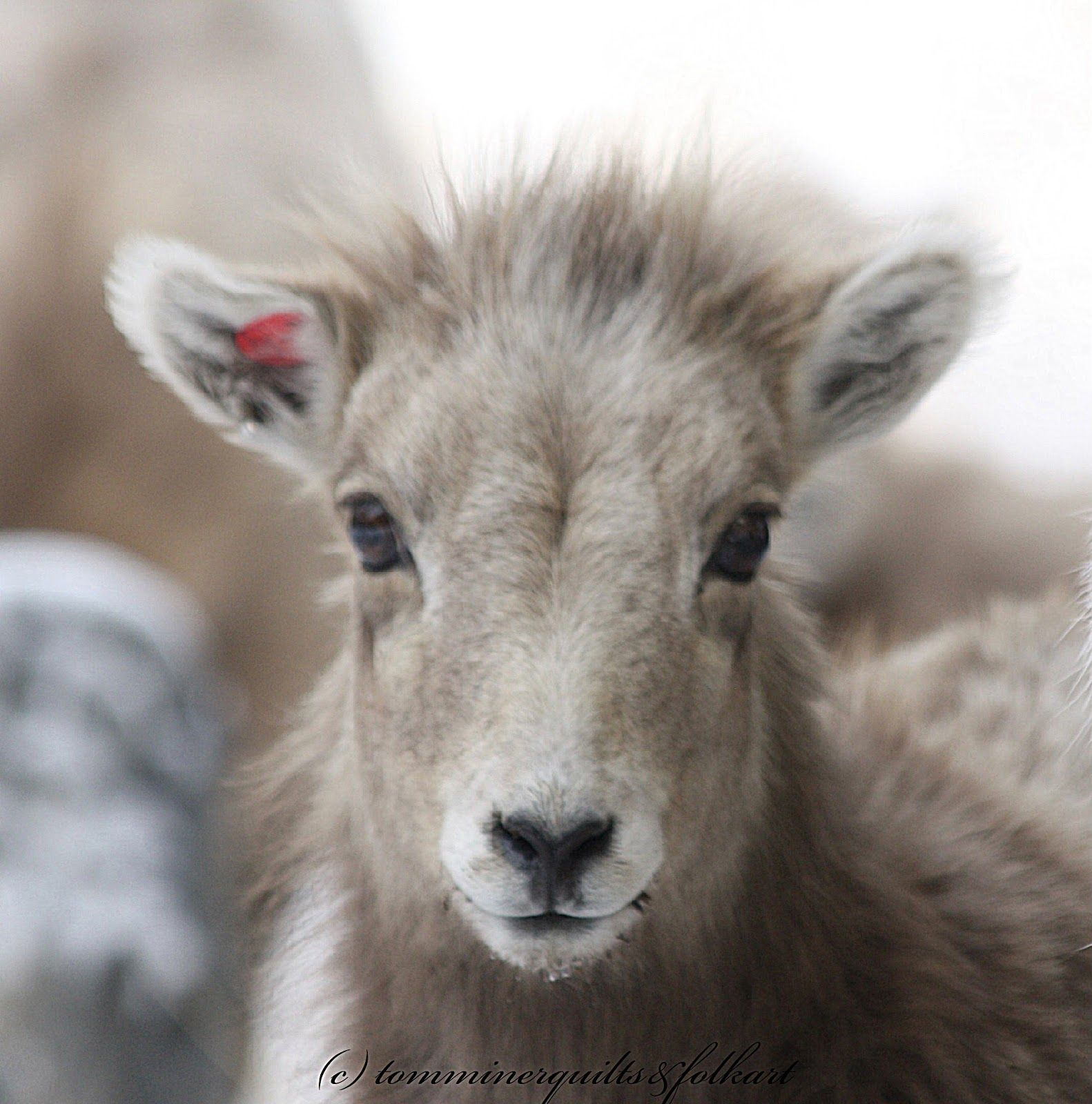 Big horn sheep lamb, Tom Miner Quilts and Folk Art | Wildlife from ... : big horn quilts - Adamdwight.com