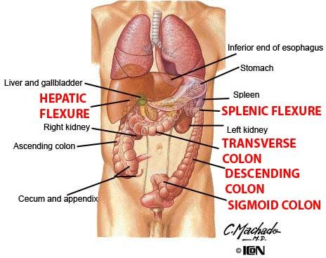 splenic flexure - Google Search | Anatomy Coding | Pinterest | Anatomy
